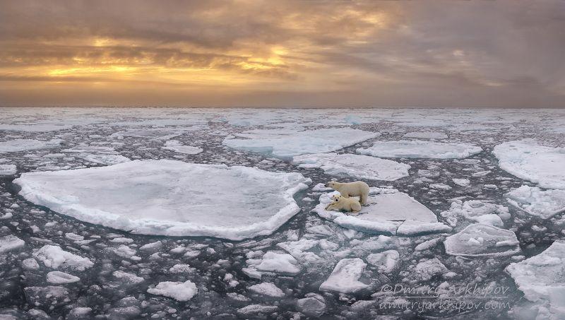 Арктический пейзажphoto preview