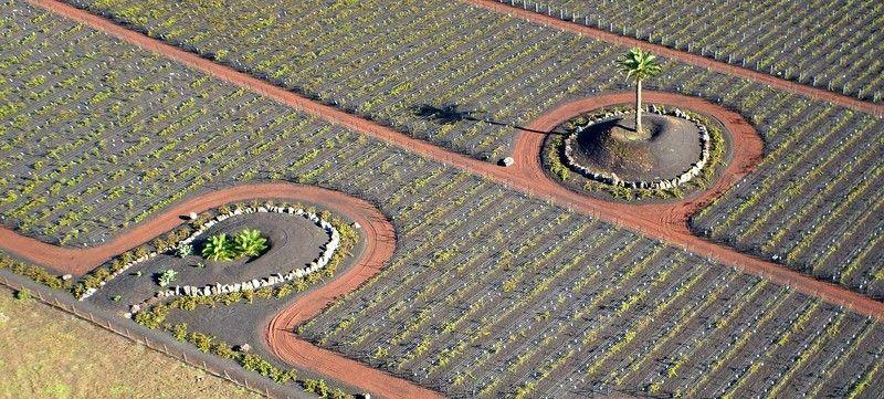 Испания, Канарские острова, Лансароте, пальмы, лоза, виноградник Три пальмыphoto preview