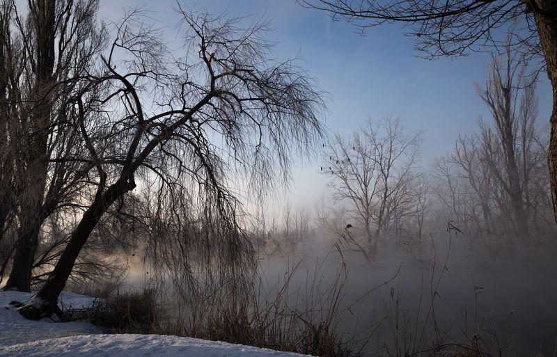 Свет зимыphoto preview
