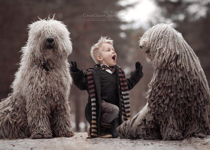 Комондор, собаки, Дети, Зима between two komondorsphoto preview