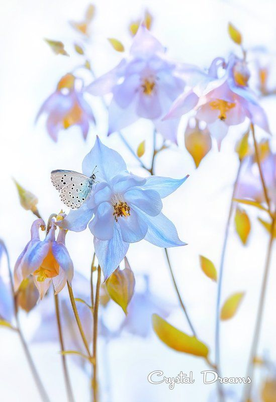 nature, crystal dreams, color, spring, butterfly, flowers \
