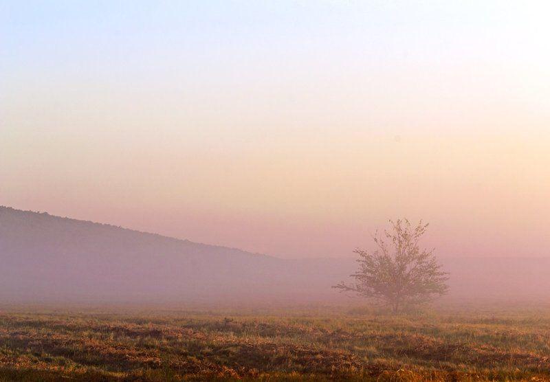 утро, туман, покосы ***photo preview