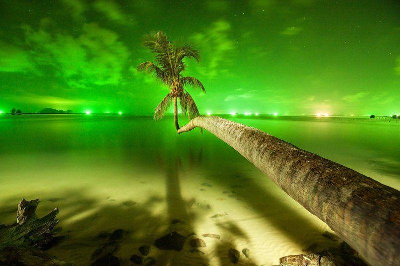 ночь, пальма, панган, тайланд Панганское чудоphoto preview