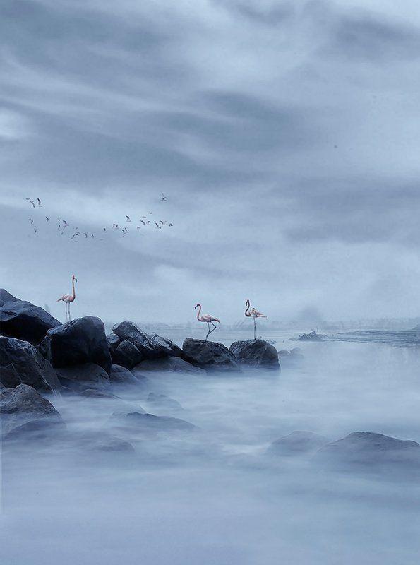 #birds #sky #sea #blue #fine_art #felamingo #rock #mehrzad_photo #hossein_mehrzad Dancing birdsphoto preview