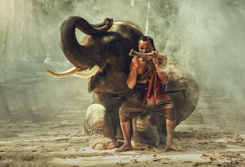 elephant,people,animal,thai,travel, Friendsphoto preview