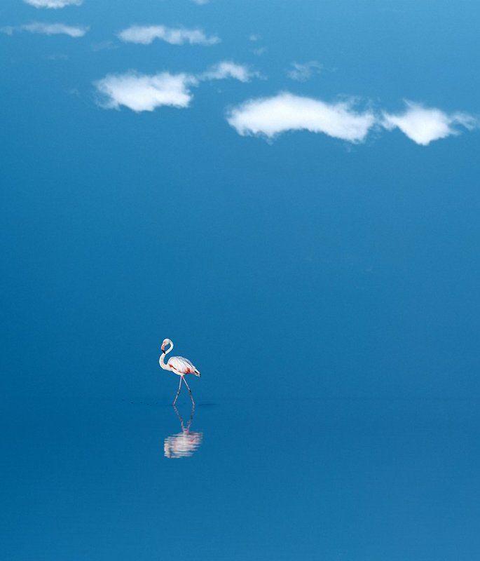 #birds #sky #sea #blue #fine_art #felamingo #rock #mehrzad_photo #hossein_mehrzad Bird Dancerphoto preview