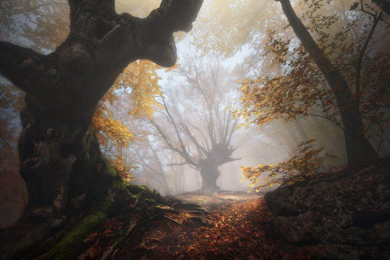 Крым, Демерджи И еще раз про сказочный лес... photo preview