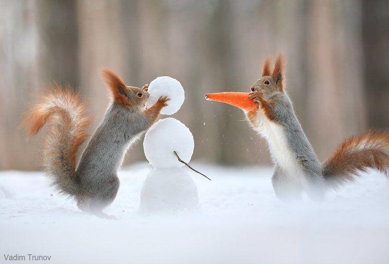 Как белки снеговика делали.photo preview