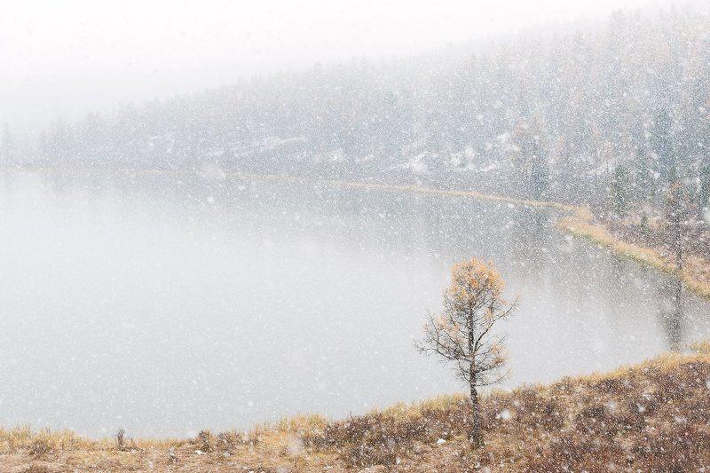 снег, озеро, Кеделю, Киделю, улаган, алтай, россия, дерево, осень, зима Снежная безмятежность (Первый снег на озере Кеделю)photo preview