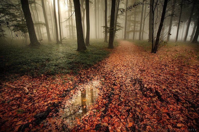 forest, leaves, colours, brown, poland, fog, mist, light Light in the forestphoto preview