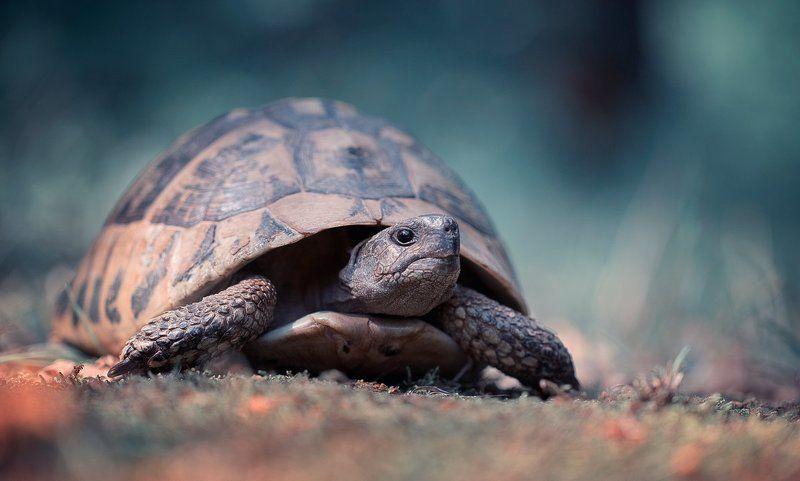 turtle,animals,amphibians,wild,wildlife,macro,light,bokeh,beautiful,nature,close up,amphibian,fairy, Turtlephoto preview