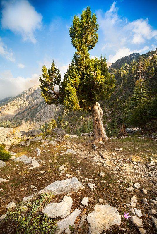 вечер, горы, цветок, дерево, поход, благодать Ликийская тропаphoto preview
