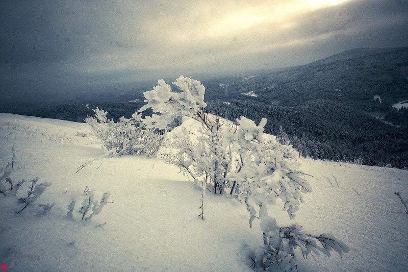 гора мухабат Время колокольчиковphoto preview