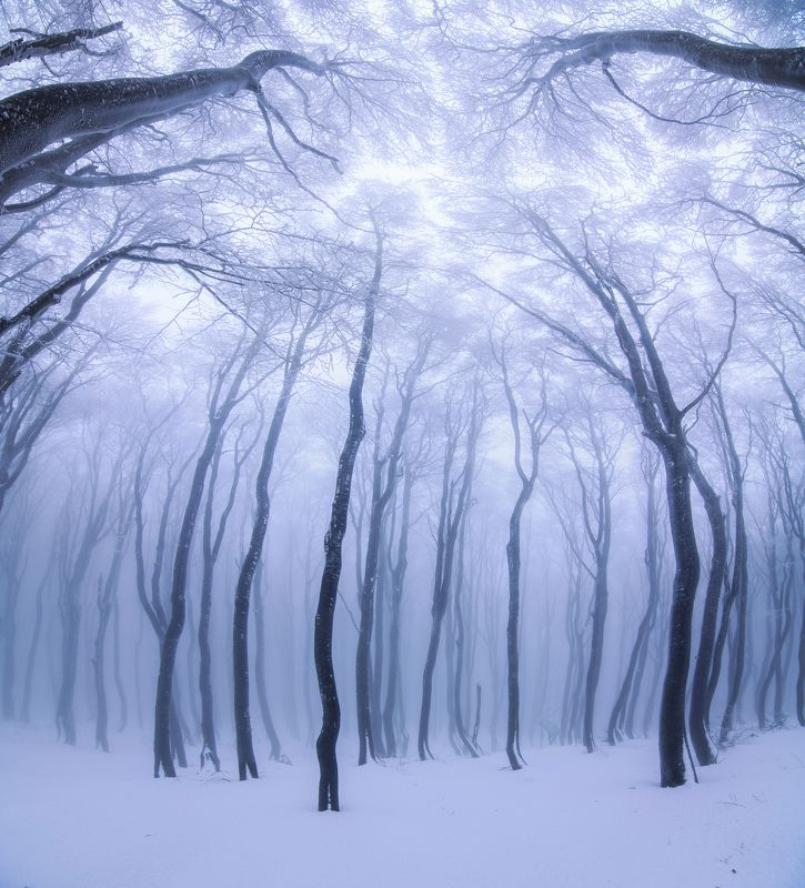 forest, winter, snow, fog, foggy , tree , landscape , beautiful , nikon , tokina , balkan, buzludzha , Forest fairytalesphoto preview