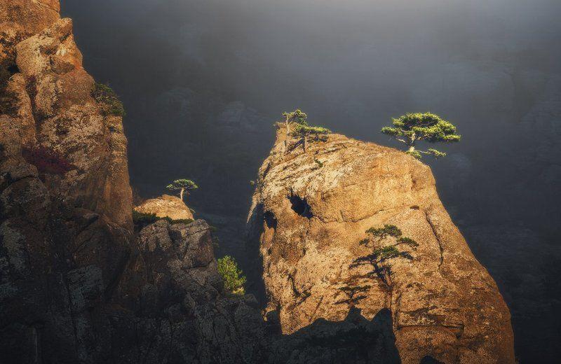 На склоне Демерджи. Сосны освещенные солнцем. photo preview