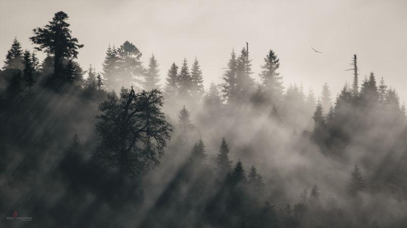 гомисмта, пейзаж, лучи, закат, деревья, лес, гуриа, грузия В лучах заходящего солнцаphoto preview