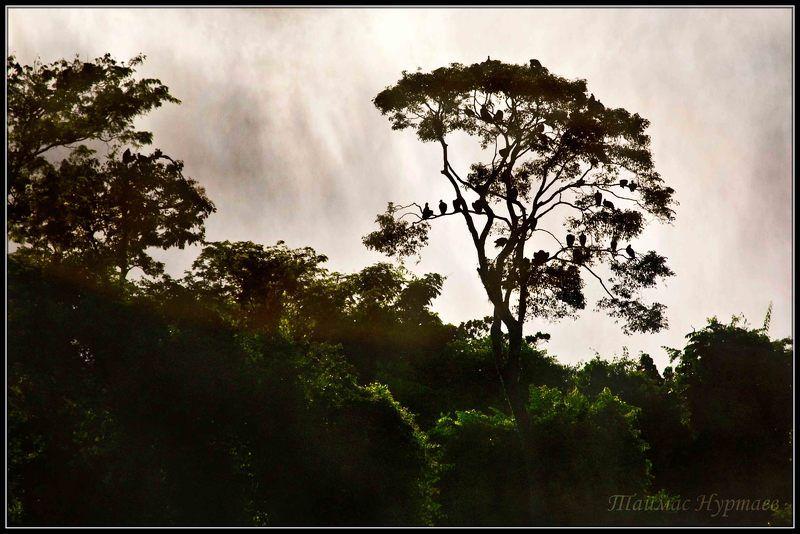игуассу Патагония. Водопады Игуассу.photo preview