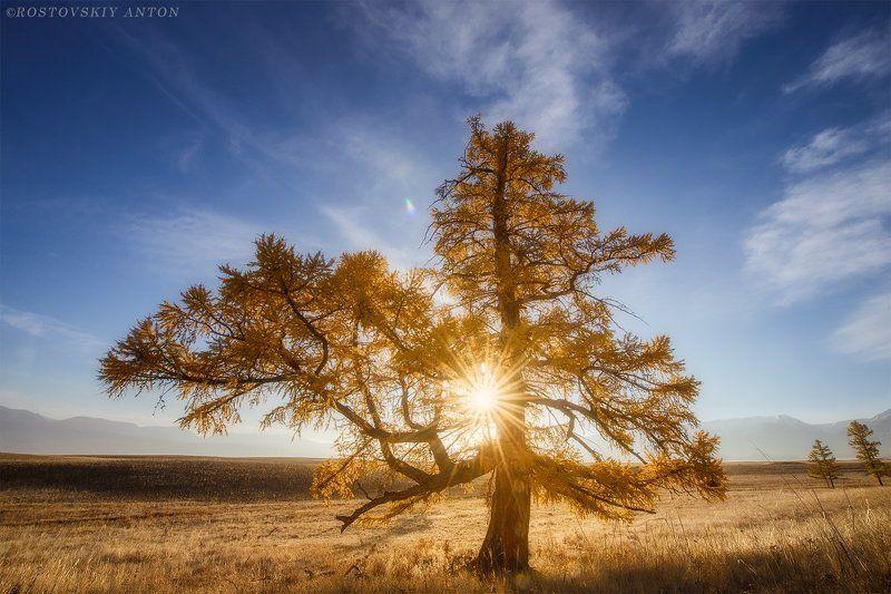 Алтай, Фототур, фосход, дерево С новым годом всех! photo preview