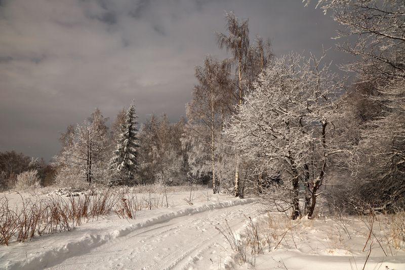 зима, С новым годом :)photo preview