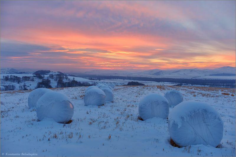 алтай, закат, вечер, зима, стерня Снежки для Великанаphoto preview