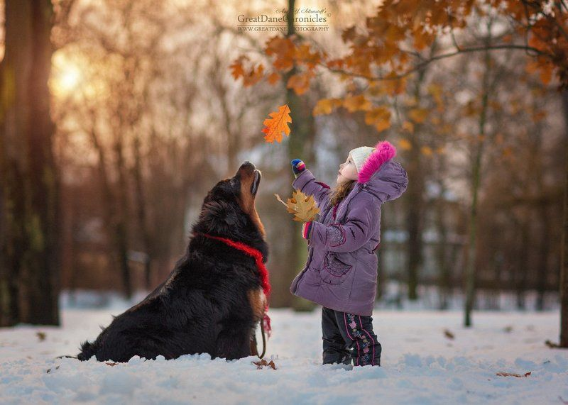 тибетский мастифф, собаки, зима, дети The last memory of the golden autumnphoto preview