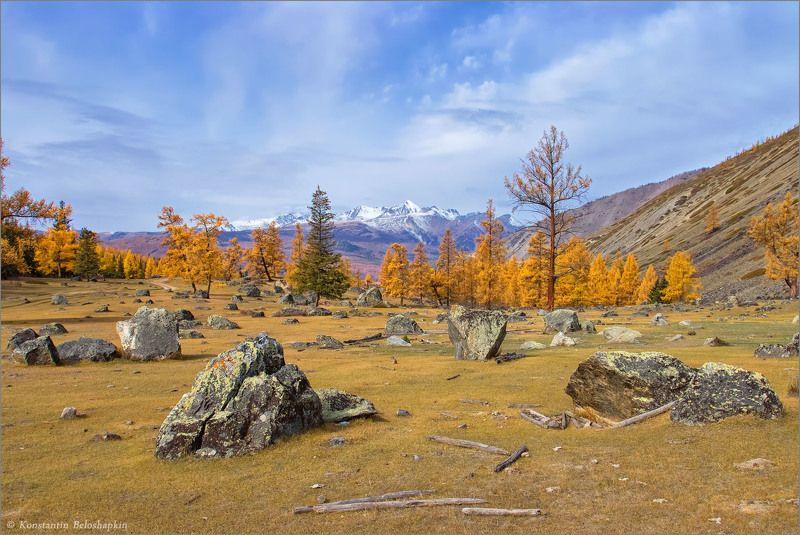 алтай, курайский хребет, лиственница, осень, степь самаха Алтайская осеньphoto preview