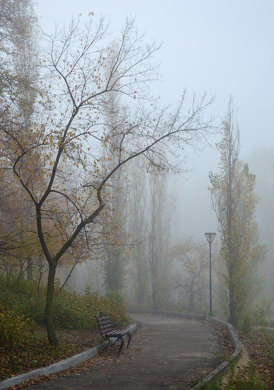 осень, парк, туман Осенний паркphoto preview