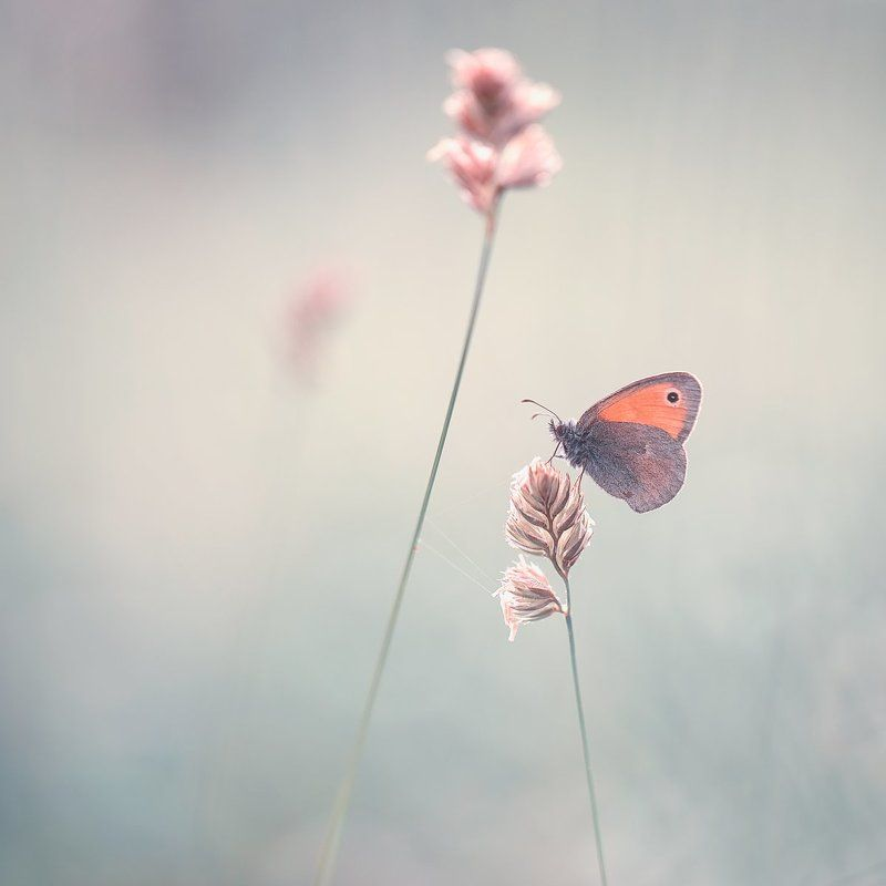butterfly,butterflies,nature,fairy,light,bokeh,beautiful,wild,wildlife,insects,macro,close up, Butterflyphoto preview