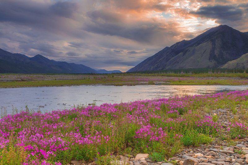 якутия, весна, цветы, фототур Вечерние соцветия photo preview