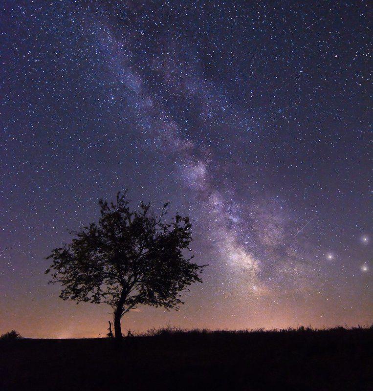 milkyway tree, night, sky, noperson, land, bulgaria, nikon , majestic , beautiful, rgsphot, tokina September Nightphoto preview