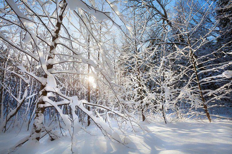 лес, зима, солнце, рождество, благодать, могилев, беларусь Рождественский Печерскphoto preview
