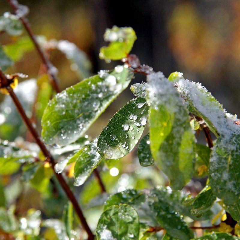 макро, утро, осени, капли, лед  Застывшие капли! photo preview