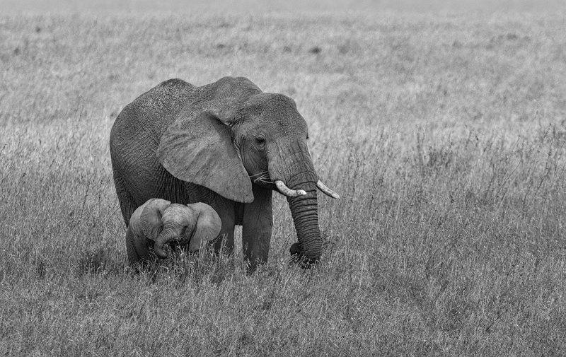 Pro слоновphoto preview