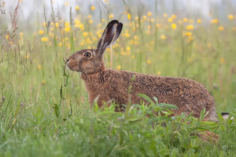 animals,nature,hare. Harephoto preview