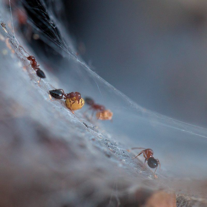 ants,ant,insects,macro,light,bokeh,beautiful,close up,fairy,nature,wild,wildlife Ants workersphoto preview