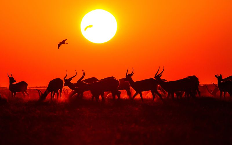 Африка, закат, солнце, олени, косули Африканский закатphoto preview