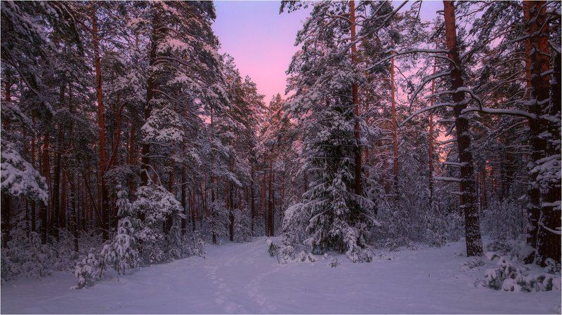Январь, снег, закат, лес, дорога Январские мотивыphoto preview
