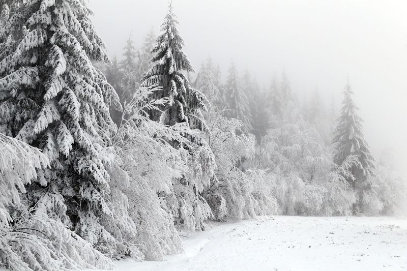 winter,snow,white,trees,fog And winter has comephoto preview