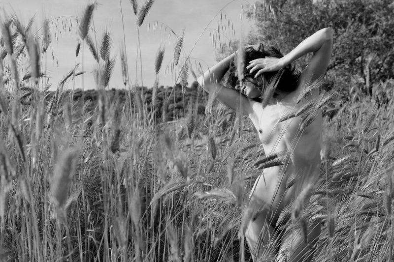 girl, nude, greece, field,  Im Feld (In the field)photo preview