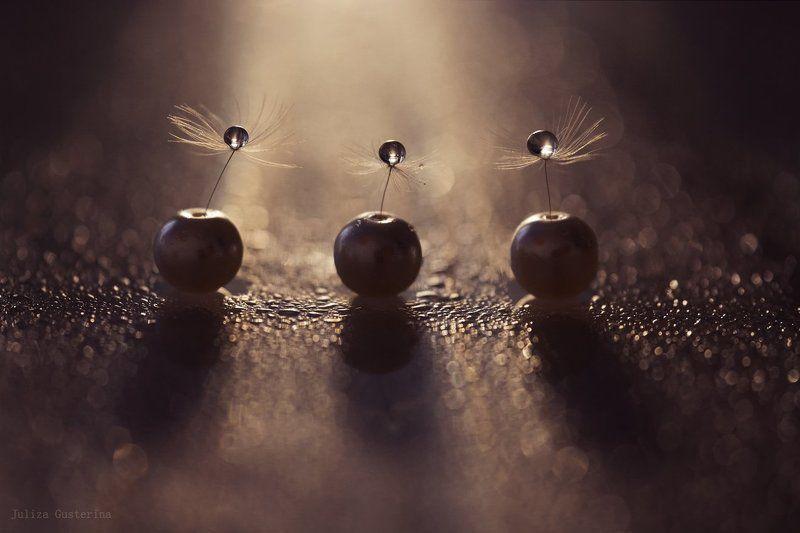 мотыльки летят на свет ...photo preview