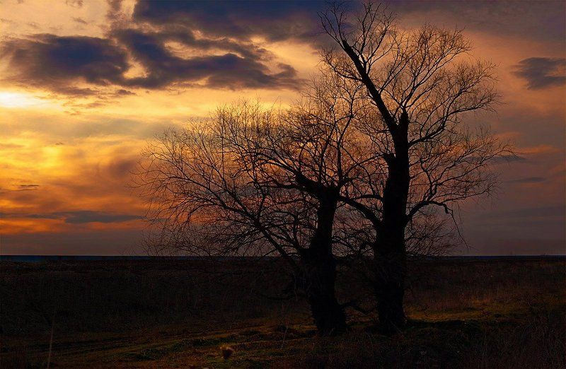 Вечер в полеphoto preview
