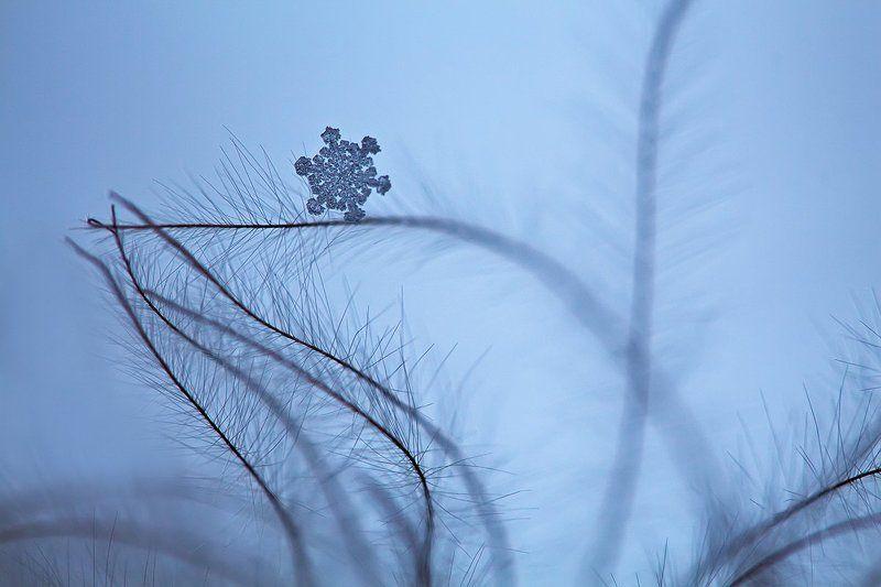 снег, снежинка, макро, природа Снежинкиphoto preview