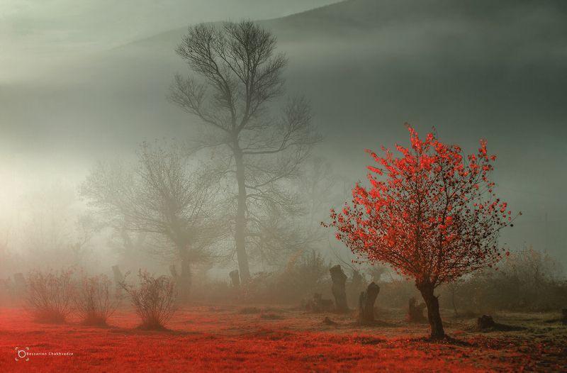 красное деревоphoto preview