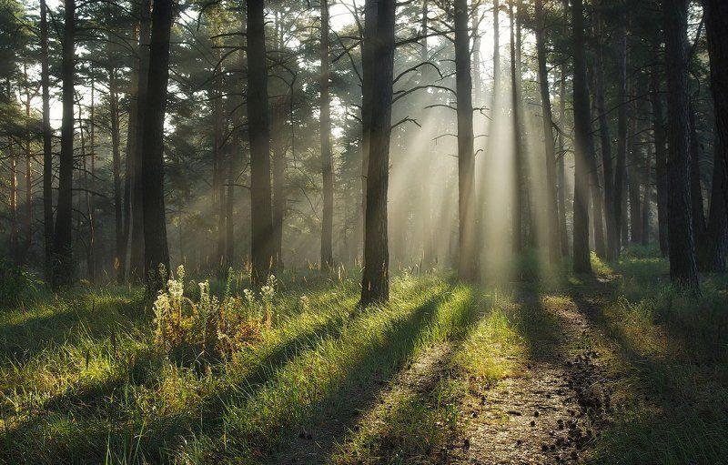 forest, light, foggy, morning, утро в лесу, солнечный свет, дымка, тени Тропами светаphoto preview