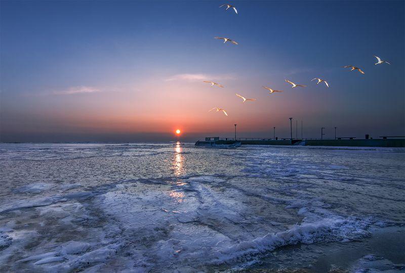 swans,sky,sunrise,ice,lagoon Лебеди-парус небаphoto preview