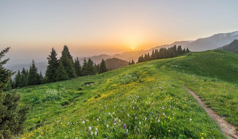утро, рассвет, горы, тишина, красочный пейзаж Летнее утро на плато Кок Жайляу.photo preview