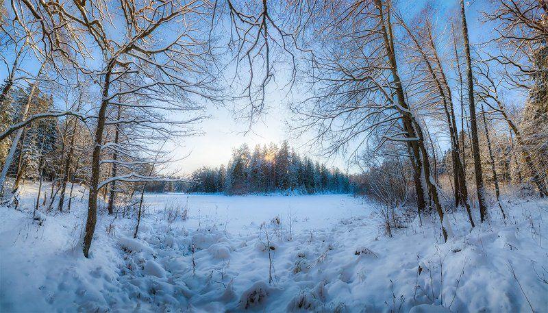 печерск, лес, озеро, зима, могилев, беларусь Печерский лесphoto preview