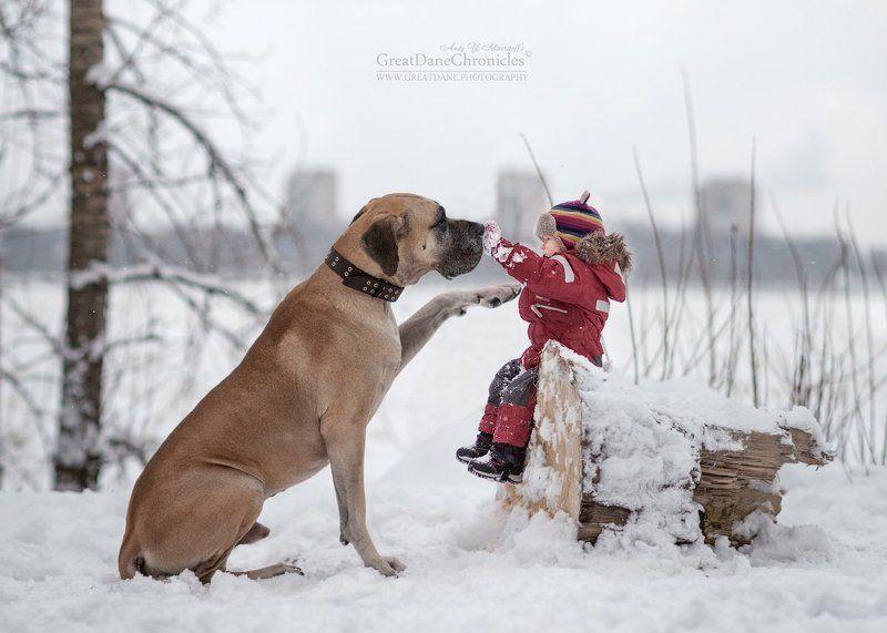 немецкий дог, собака, зима, дети With my best friend!photo preview