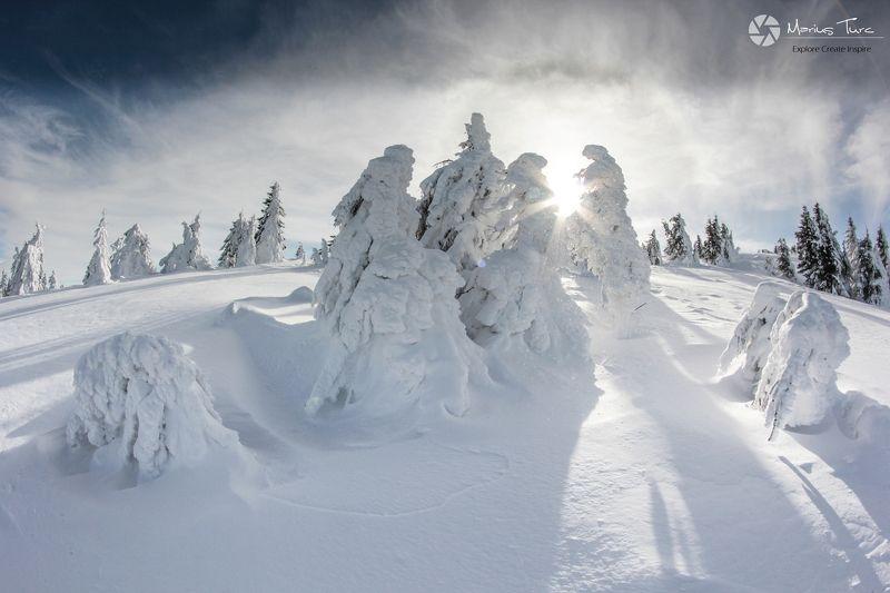 snow,trees,winter,frozen,sky,sun,light Happy family photo preview