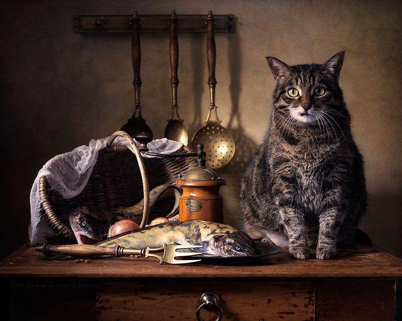 кот, рыба, налим, натюрморт, колыбельная Колыбельная для рыбкиphoto preview